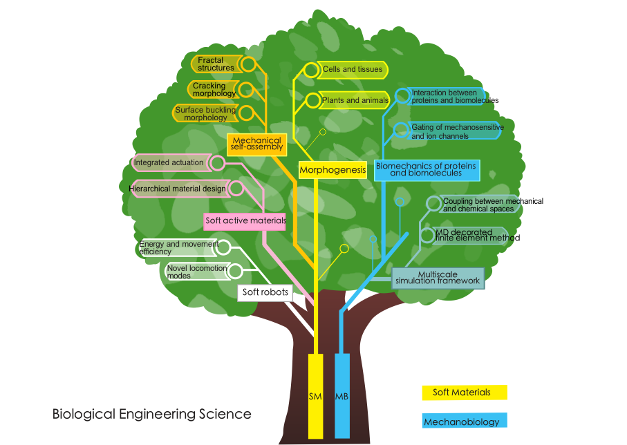 "alt=""Biological Engineering Science tree map"""